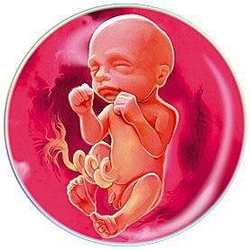 #беременность_по_неделям@подслушано_у_беременных  Двадцать четвертая неделя беременности  Конец шестого месяца беременности. Ребенок...