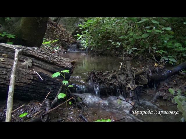 🌿 Горный Ручей в Лесу со Звуками Природы и Журчанием воды ~ 🌿