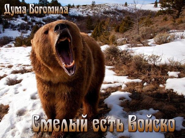 Обои На Телефон Медведь