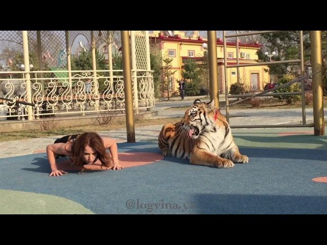 Тренировка с тигром При участии @ Магды и @demidovshow