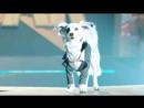 Звёздный Щенок Мировой Тур / Pup Star World Tour 2018