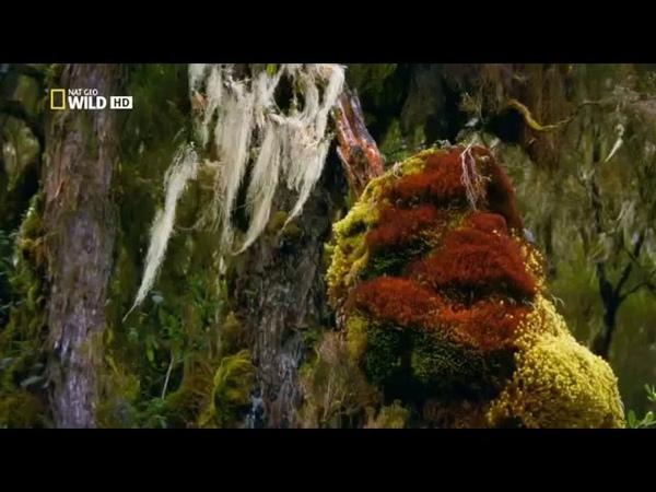 Дикая природа Дикий нил часть 3