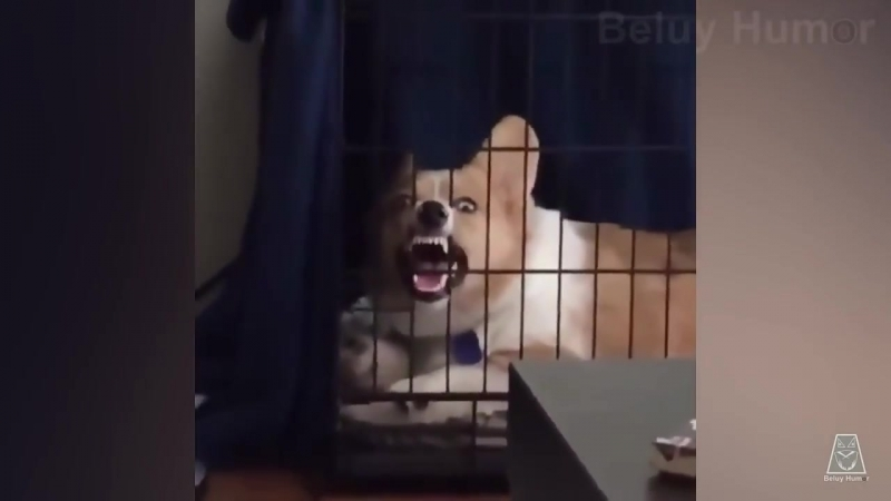 Та самая бешеная собака ржёт в клетке mp4