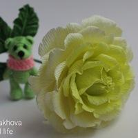 AnyutaMalakhova
