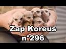 Zap Koreus n°296