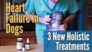 Сердечная недостаточность у собак 3 новых холистических способа лечения Heart Failure in Dogs 3 New Holistic Treatments