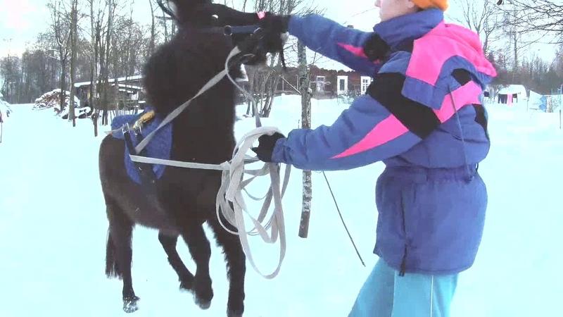 Как заездить пони в упряжь смотреть онлайн без регистрации