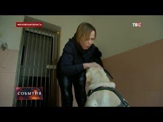 Вокруг закона о потенциально опасных собаках развернулась дискуссия
