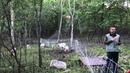 Using Goats to Graze Brush and Invasive Plants