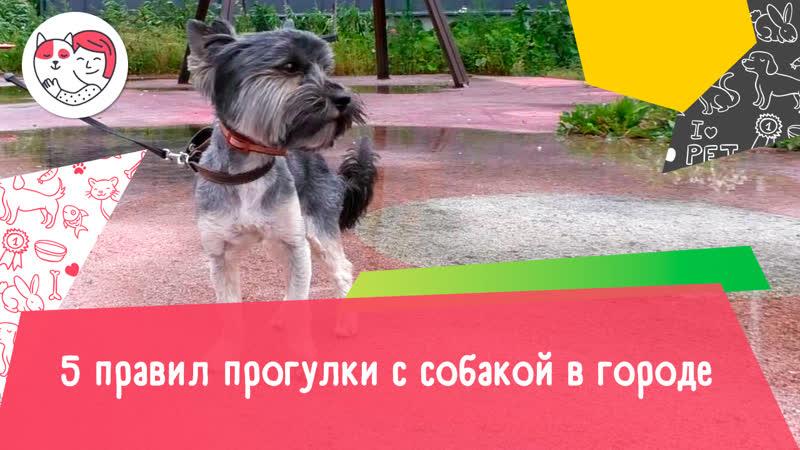5 правил прогулки с собакой в городе
