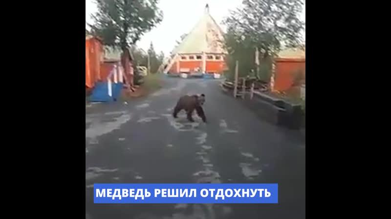 В Норильске на территорию базы отдыха Мечта забрел медведь