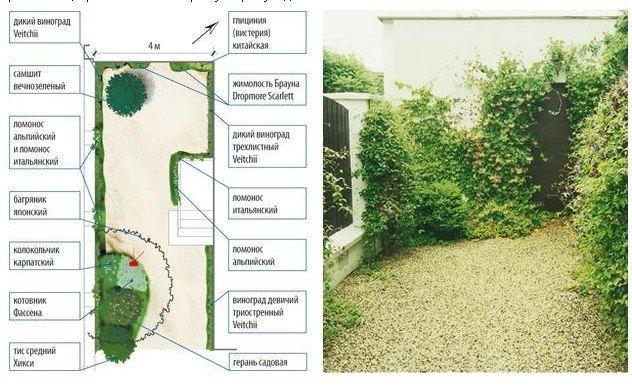 Пять идей оформления ландшафта на узком участке