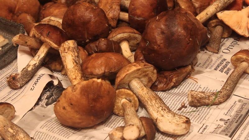 Правила сушки грибов Подберёзовики