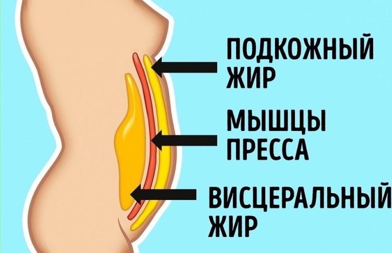 ВИДЫ ЖИРОВ В ТЕЛЕ ЧЕЛОВЕКА И КАК С НИМИ БОРОТЬСЯ? | ВКонтакте