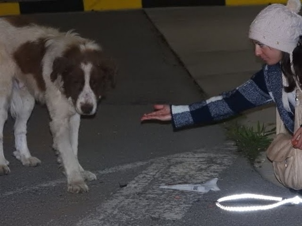 Rescue of a giant dog who didn't know how to ask for help