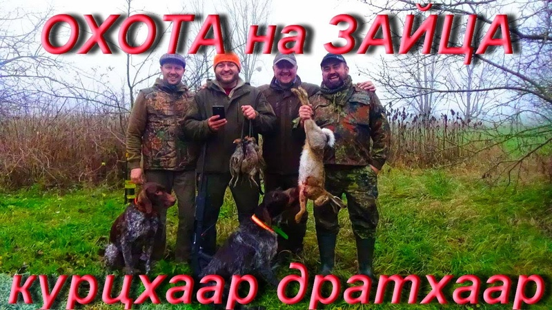 №75 Охота на зайца и куропаток с гончими? - НЕТ! Охота на зайца с легавыми
