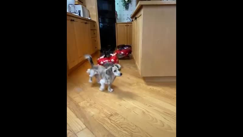 """The Fast The Furry Kitchen Drift checkered flag stuck out tongue closed eyes """" Tag a friend ~ Crusoe SD mp4"""
