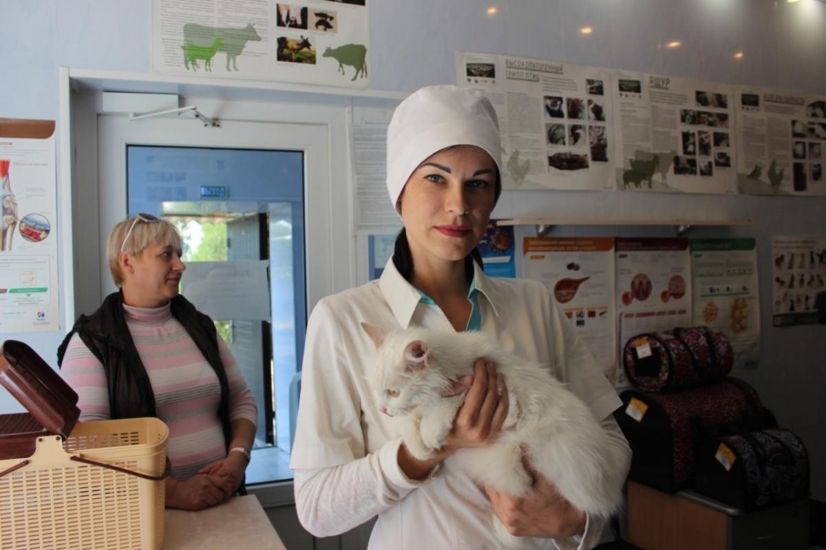 В 2020 году донские ветврачи планируют привить от бешенства 275 тысяч собак и кошек