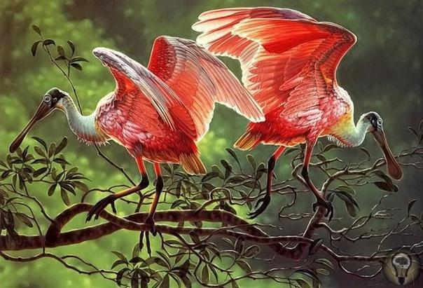 ПТИЦЫ В ДИКОЙ ПРИРОДЕ. часть 2en W. Essenburg талантливый художник-самоучка, посвятивший своё творчество реалистичному изображению красоты дикой