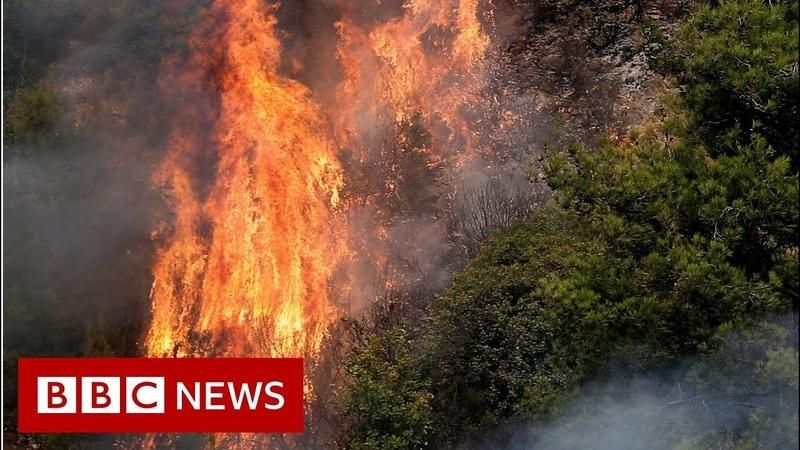 Lebanon battles worst wildfires in decades - BBC News