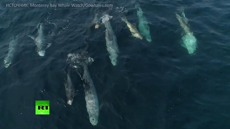 Восторг от жизни маленькие дельфины резвятся в заливе Монтерей