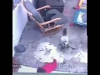 Кошка спасает ребенка, который сбежал из своей кроватки от падения вниз по крутой лестнице