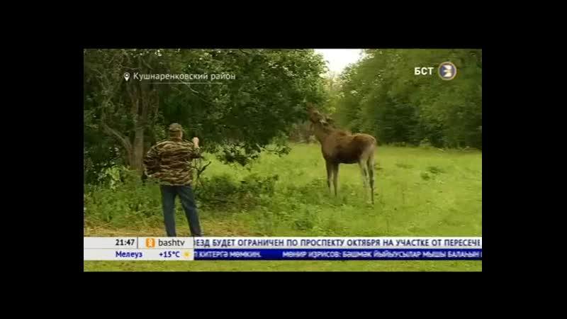 детенышей животных подобрали в Белебеевском районе и привезли на базу