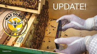 Horizontal Long Langstroth Hive UPDATE and BeeScanning APP Review Digital Varroa Detection?