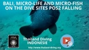 Bali, micro life and micro fish on the dive sites POS2 Falling with the club Thailand Diving Pattaya