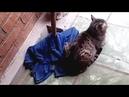 Самый невозмутимый кот в мире
