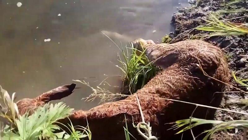 Рыбак спас жеребенка, который упал в Уфимку