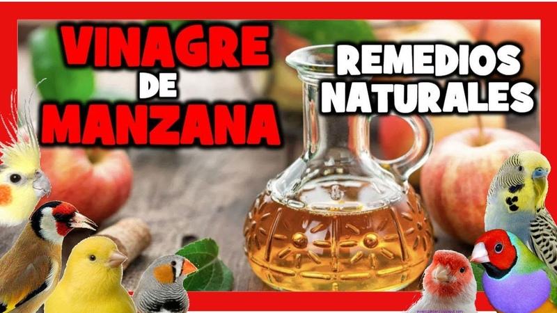 VINAGRE de MANZANA para CANARIOS y PAJAROS EXOTICOS 🐤 REMEDIOS NATURALES para DESPARASITAR CANARIOS