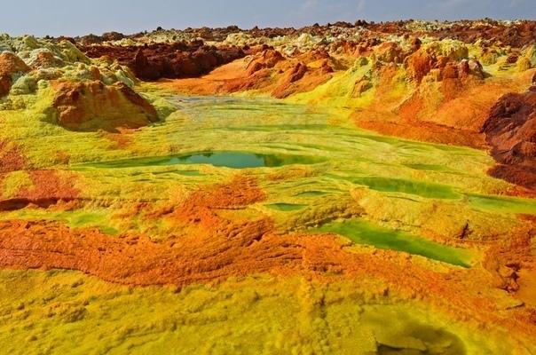 Ядовитые красоты пустыни Данакиль
