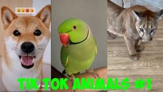 Милые животные тик ток #1 | Tik tok animals. Cute pets.