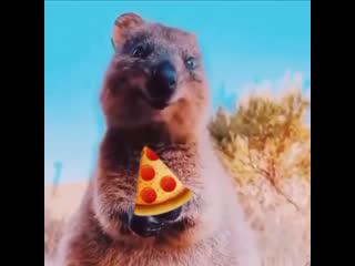 Когда привезли пиццу и ты сидишь ешь довольныи