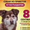 Выставка собак из приютов #СЧАСТЬЕДАРОМ