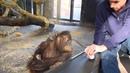 Парень показывает фокус обезьяне в зоопарке