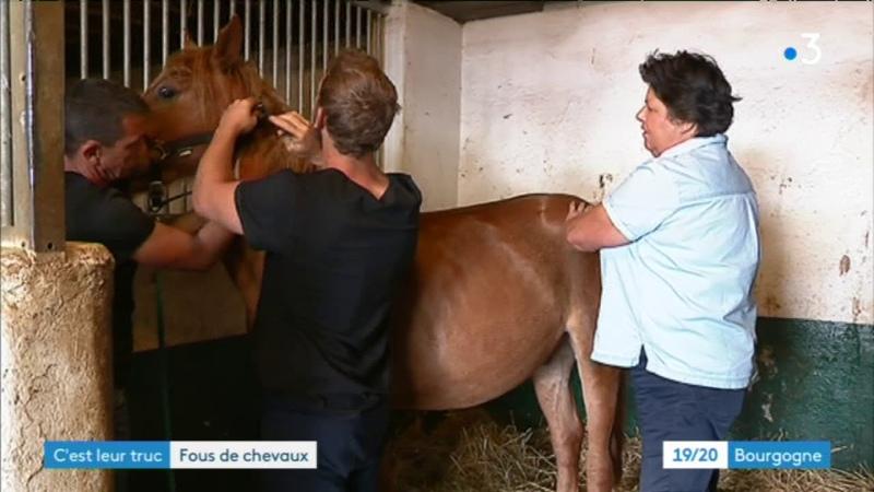 C'est leur truc avec leur refuge ils secourent les chevaux maltraités