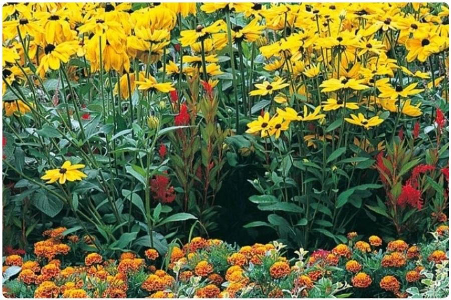 Правила выращивания многолетников из семян
