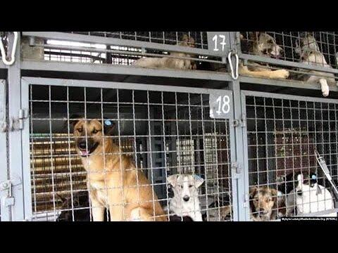 власти якутии убили более 200 животных по законам созданным властями путина