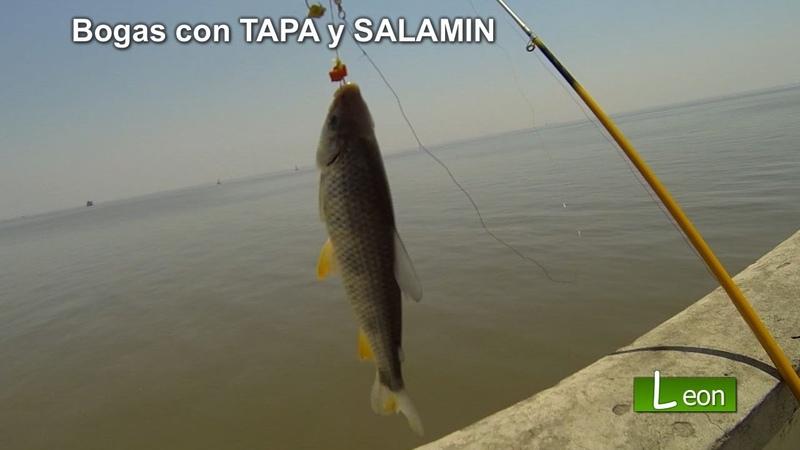 Pescar Bogas con TAPA y SALAMIN Pescar bogas de rió como pescar bogas