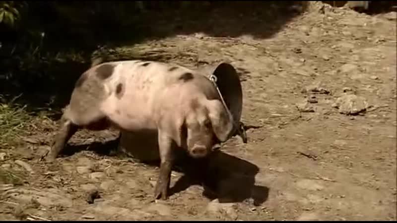 2009 BBC Викторианская ферма 06