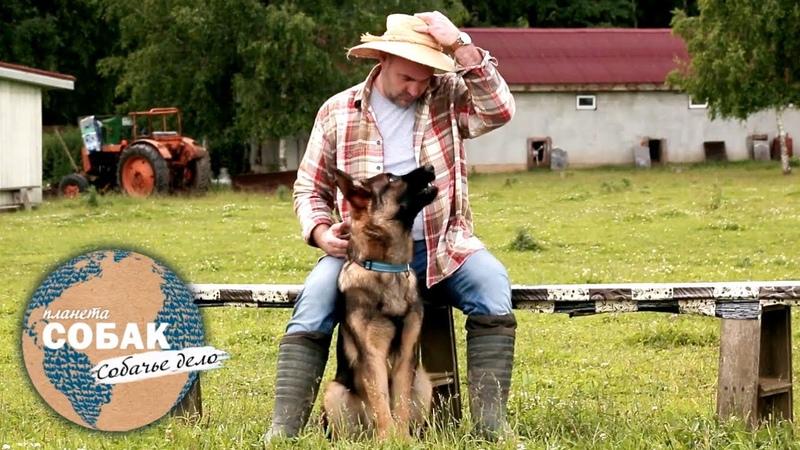Планета собак Собачье дело Собаки пастухи Овчарка бордер колли корги австралийский келпи
