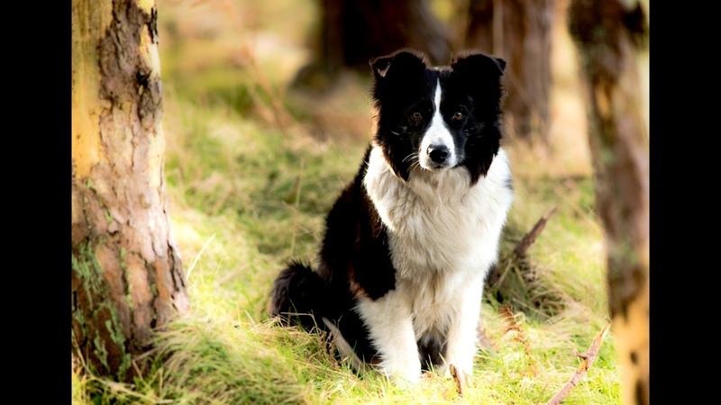 Истории из жизни Страшный пёс из яблоневого сада