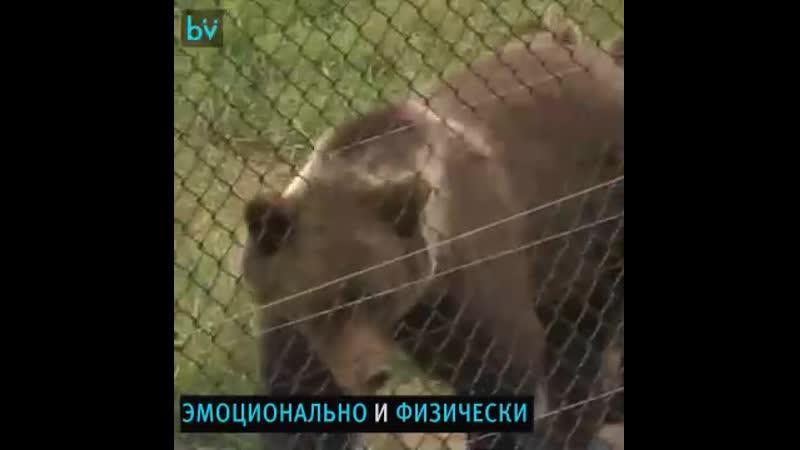 Приют Белая скала место где живут медведи после рабства