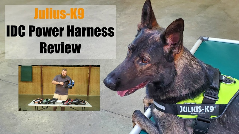 Julius K9 IDC Power Harness Review by Protection Dog Sales