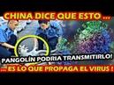ULTIMA HORA ¡ DESCUBREN EN CHINA LA FUENTE DE ORIGEN DEL CORO NA VI RUS EL PANGOLIN LO PROVOCA