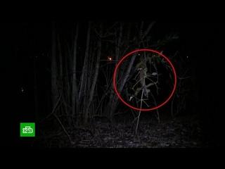 Жителей Флориды предупредили о падающих с деревьев игуанах