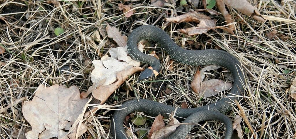 оставшееся подключение фото змей в тамбовской области смешные задания наступающий
