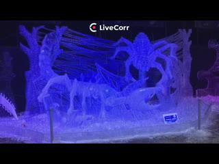 Live: Фестиваль ледовых скульптур в Петербурге